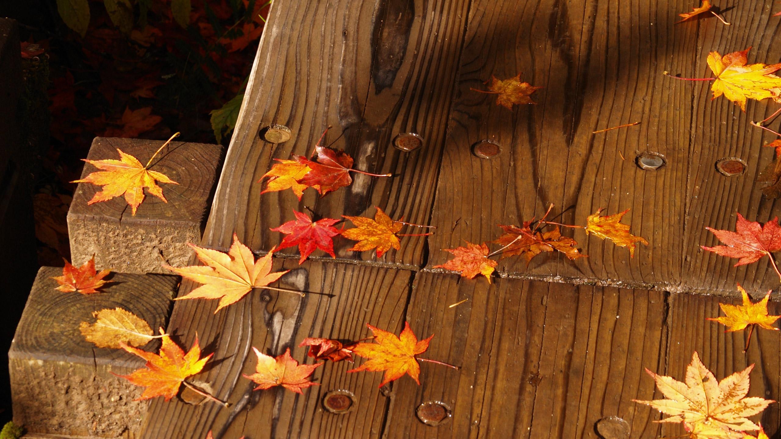 四季 秋の無料壁紙 秋の風景写真 高解像度 高画質