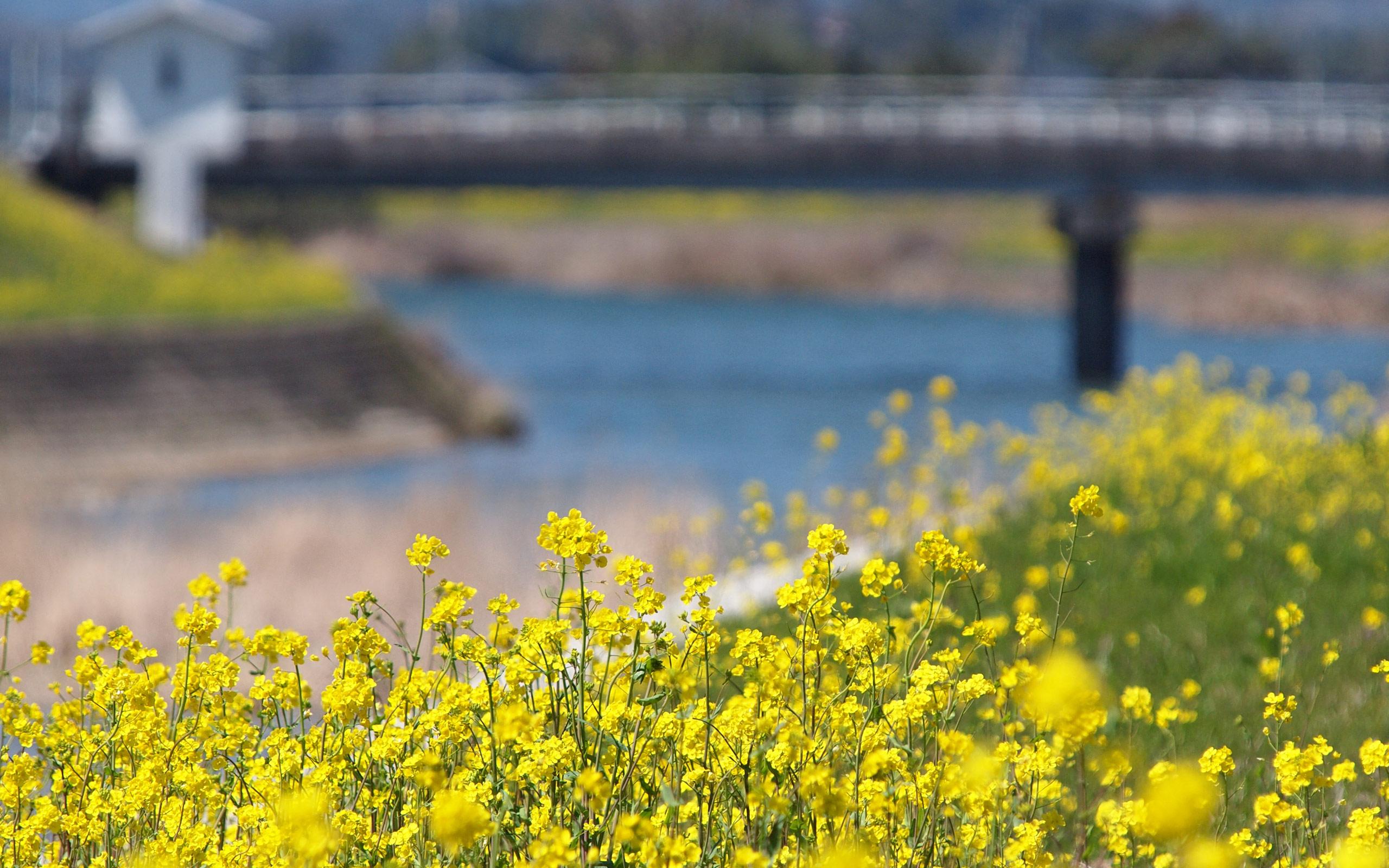 四季 春の無料壁紙 春の風景写真 高解像度 高画質