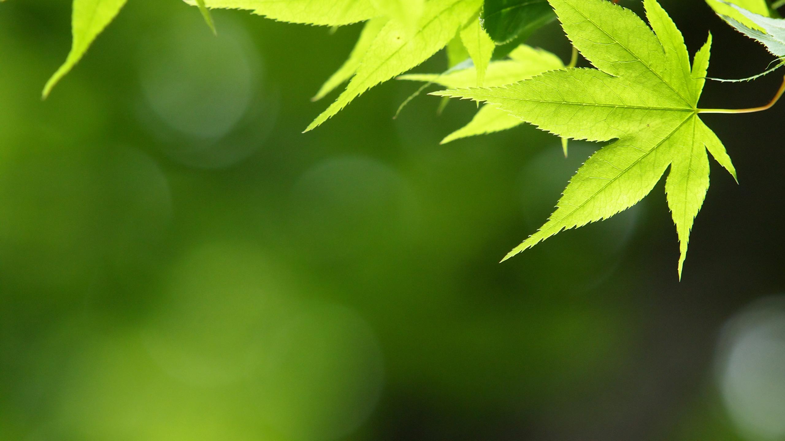 シンプル 緑の壁紙 緑色のシンプル写真 高解像度 高画質の無料壁紙