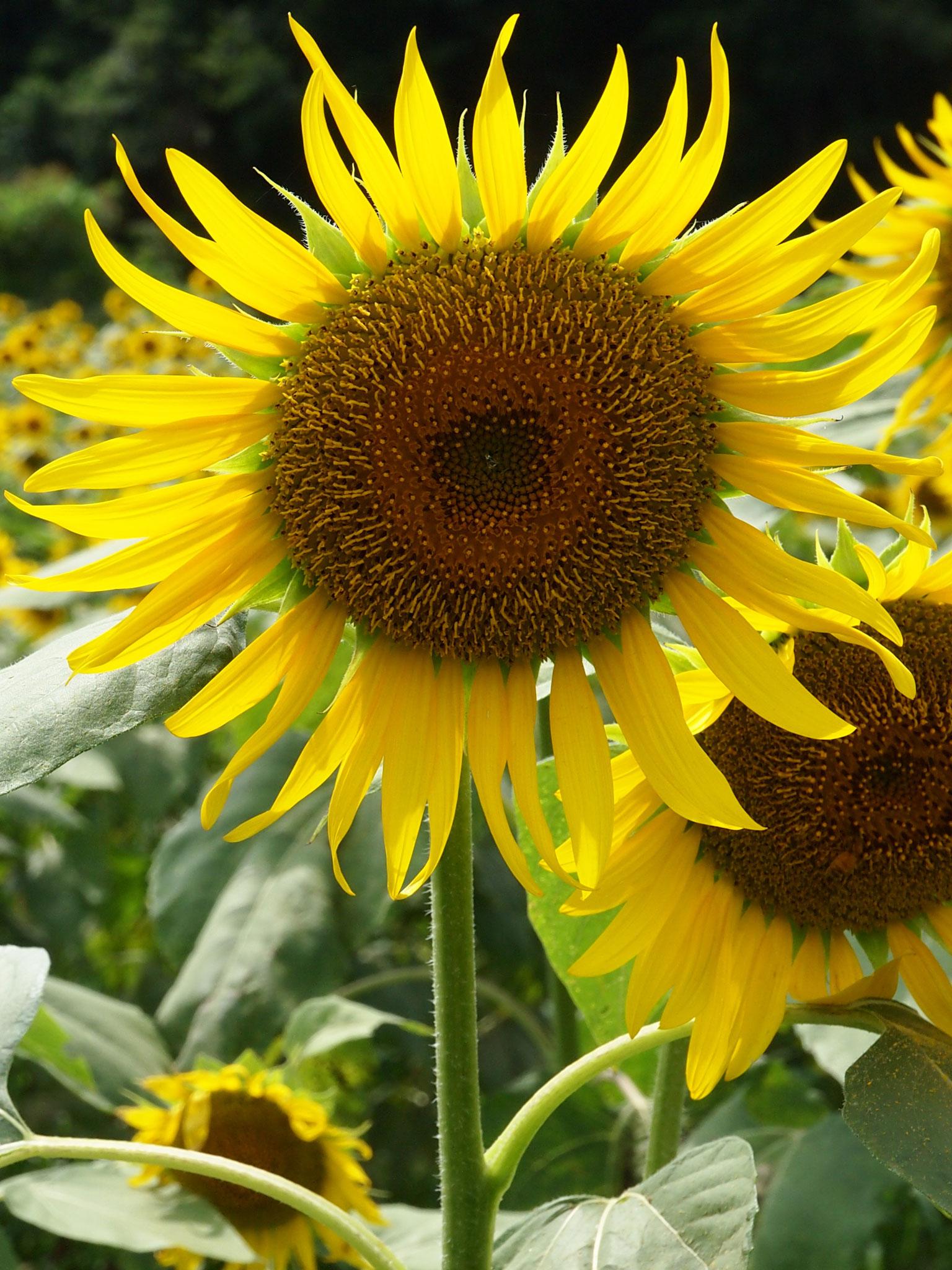 四季 夏の無料壁紙 夏の風景写真 高解像度 高画質
