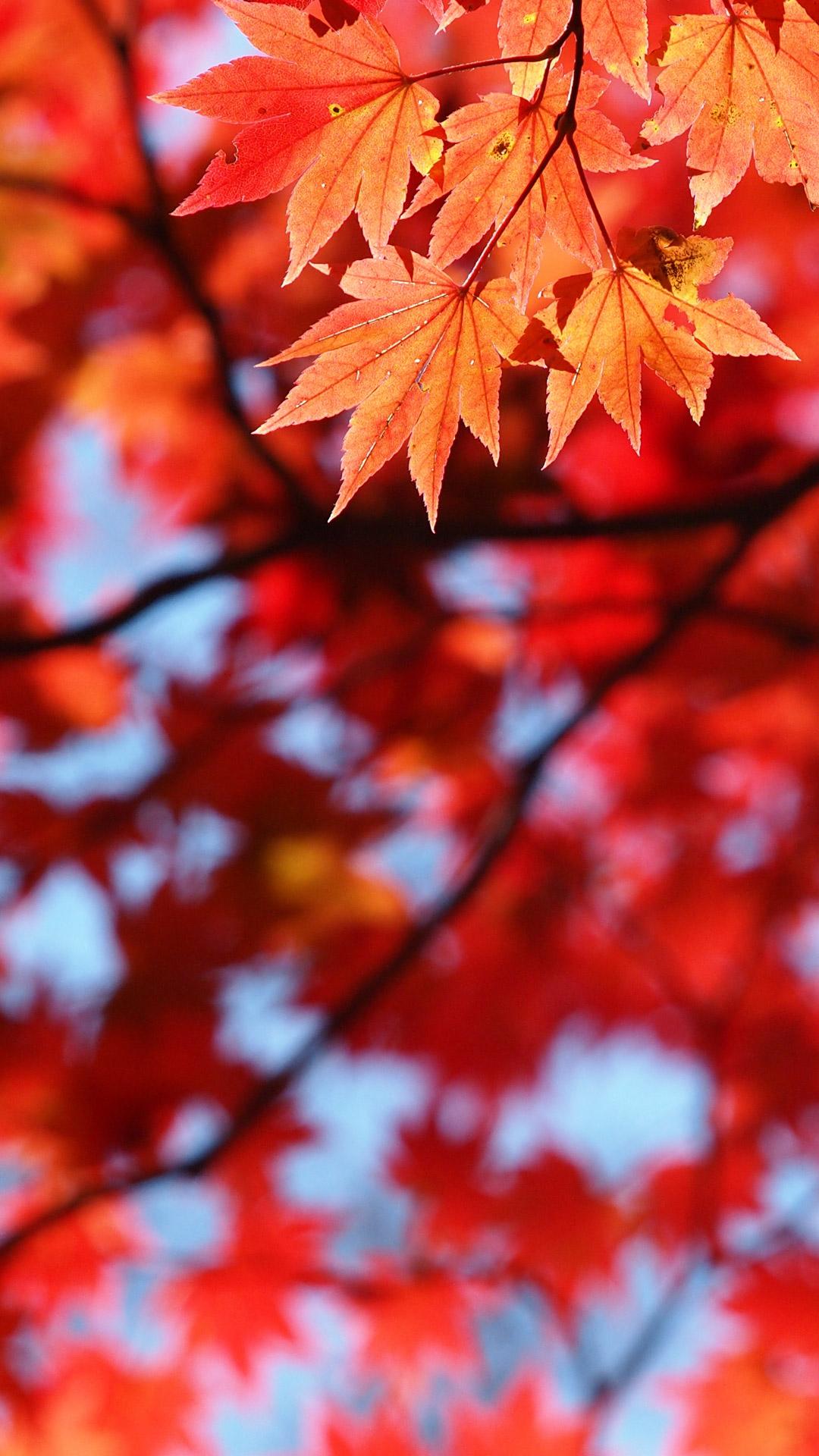 シンプル 赤 レッド の壁紙 赤色のシンプル写真の高解像度 高画質